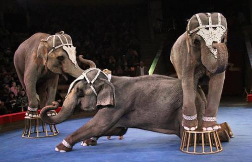 7 цирковых артистов, погибших на арене