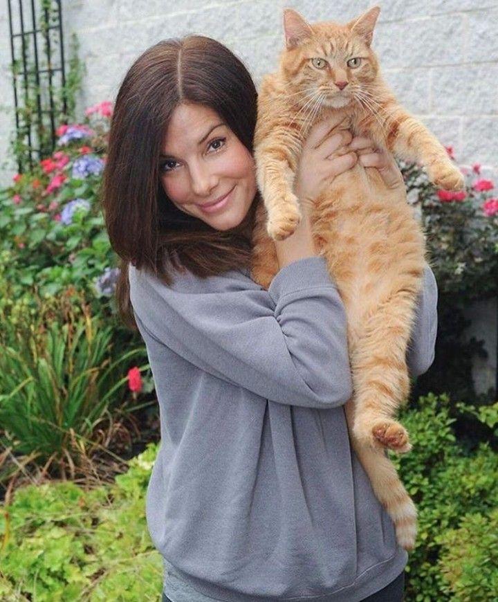 10 звезд, которые любят кошек